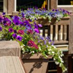 Vail-Mountain-Elegant-flower-boxes